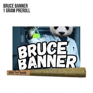 79689_bruce_banner